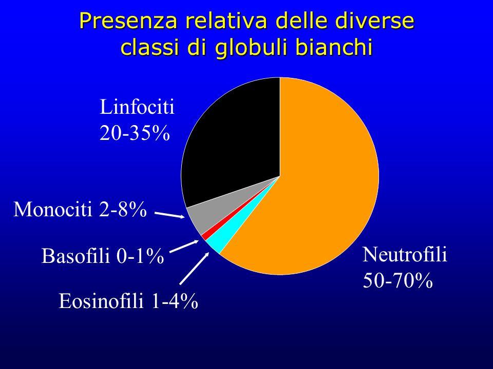 Presenza relativa delle diverse classi di globuli bianchi Neutrofili 50-70% Linfociti 20-35% Monociti 2-8% Basofili 0-1% Eosinofili 1-4%