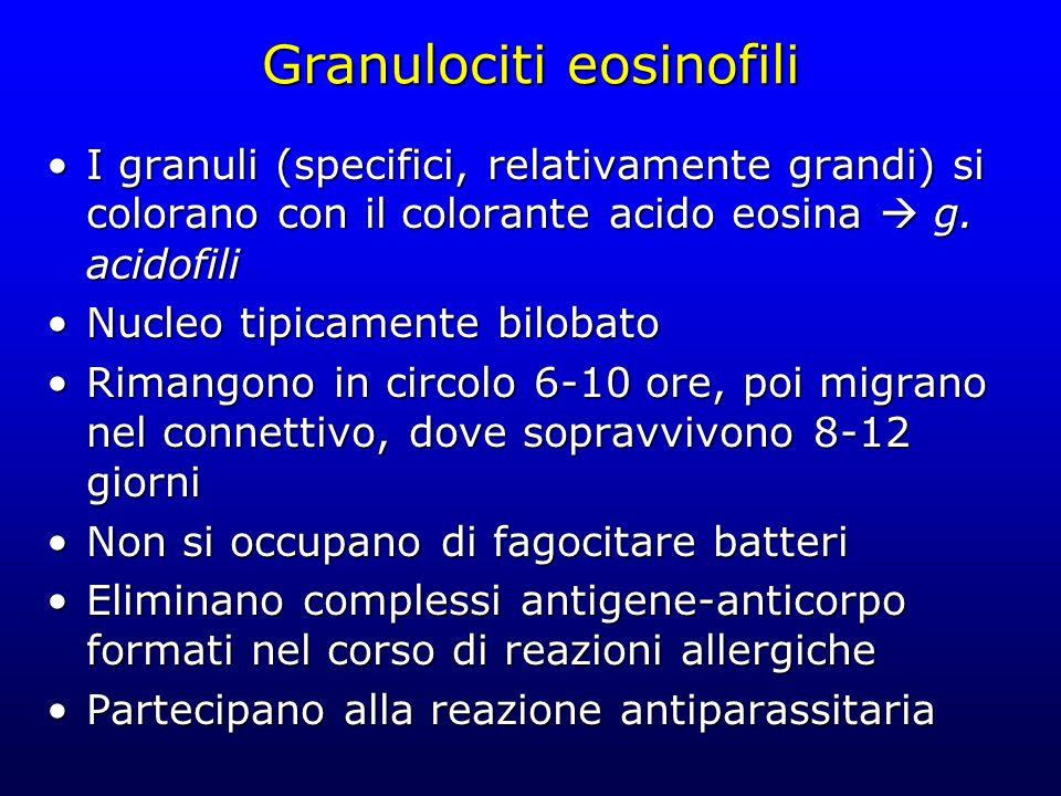 Granulociti eosinofili I granuli (specifici, relativamente grandi) si colorano con il colorante acido eosina g. acidofiliI granuli (specifici, relativ