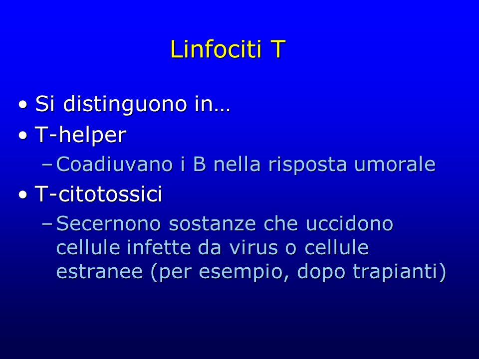 Linfociti T Si distinguono in… T-helper –Coadiuvano i B nella risposta umorale T-citotossici –Secernono sostanze che uccidono cellule infette da virus