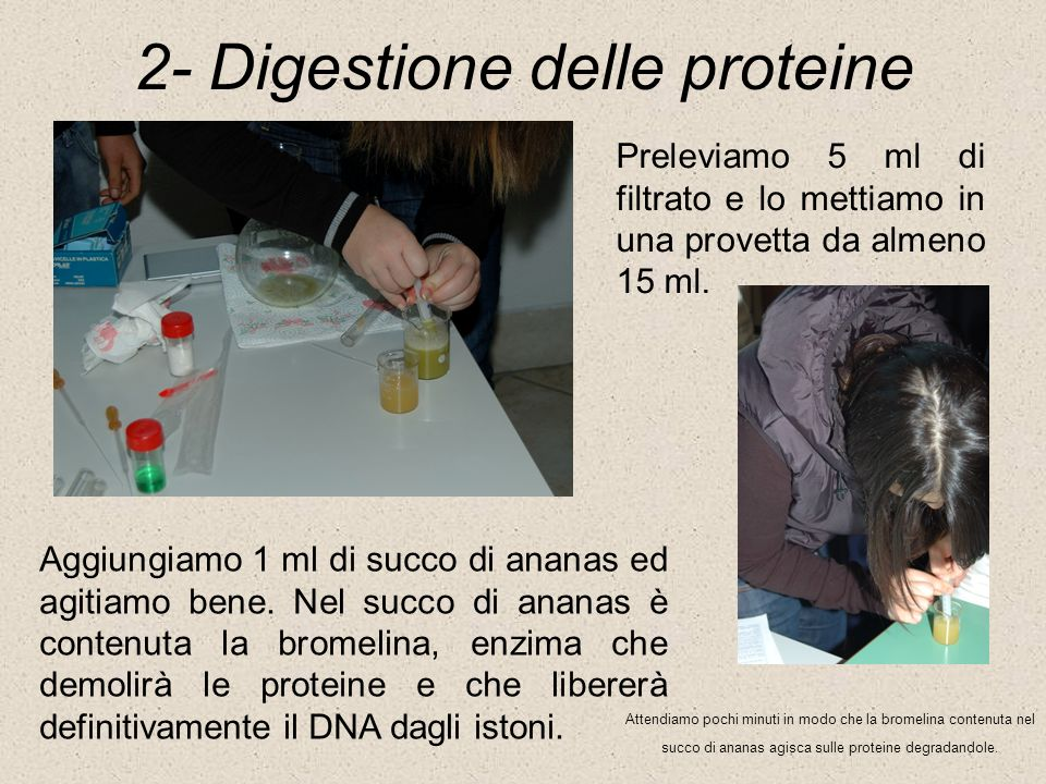2- Digestione delle proteine Preleviamo 5 ml di filtrato e lo mettiamo in una provetta da almeno 15 ml. Aggiungiamo 1 ml di succo di ananas ed agitiam