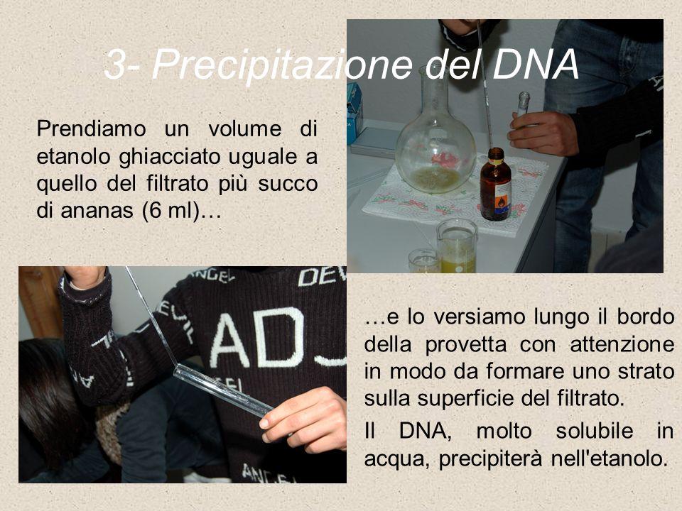 3- Precipitazione del DNA …e lo versiamo lungo il bordo della provetta con attenzione in modo da formare uno strato sulla superficie del filtrato. Il