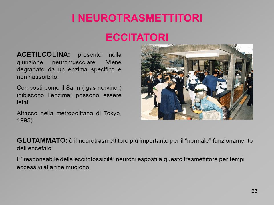 24 I NEUROTRASMETTITORI INIBITORI GABA: è con la glicina il principale neurotrasmettirore inibitore.