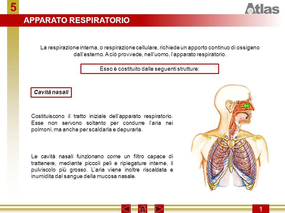 Premere un tasto per procedere con la presentazione. 5 1 La respirazione interna, o respirazione cellulare, richiede un apporto continuo di ossigeno d