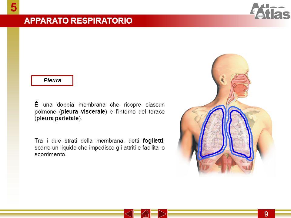 5 9 Pleura È una doppia membrana che ricopre ciascun polmone (pleura viscerale) e linterno del torace (pleura parietale). Tra i due strati della membr