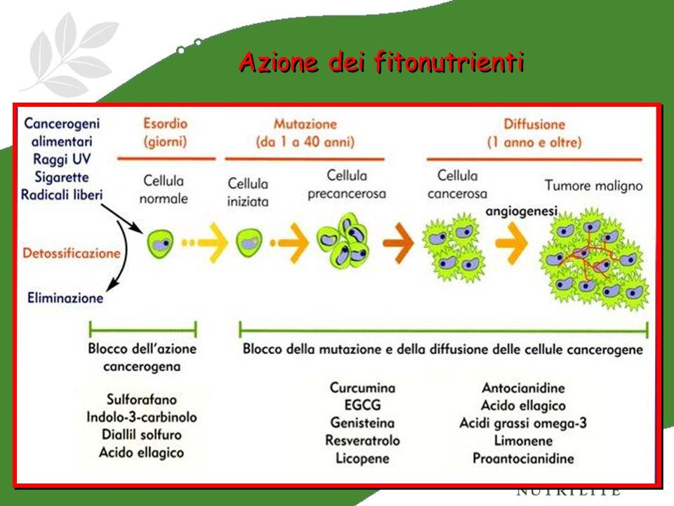 Azione dei fitonutrienti