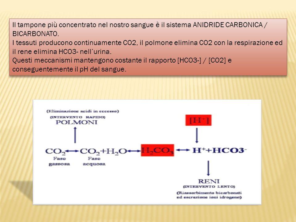 Il tampone più concentrato nel nostro sangue è il sistema ANIDRIDE CARBONICA / BICARBONATO. I tessuti producono continuamente CO2, il polmone elimina