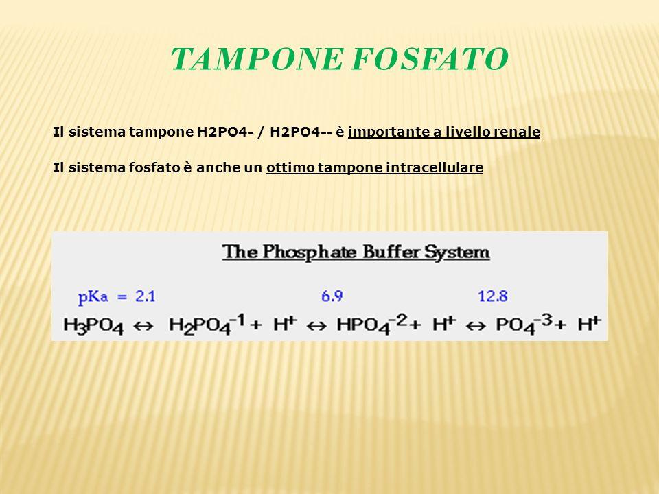 TAMPONE FOSFATO Il sistema tampone H2PO4- / H2PO4-- è importante a livello renale Il sistema fosfato è anche un ottimo tampone intracellulare