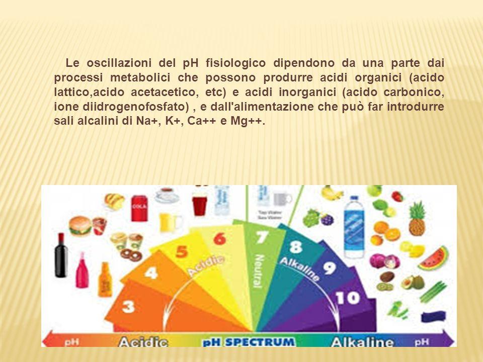 Le oscillazioni del pH fisiologico dipendono da una parte dai processi metabolici che possono produrre acidi organici (acido lattico,acido acetacetico