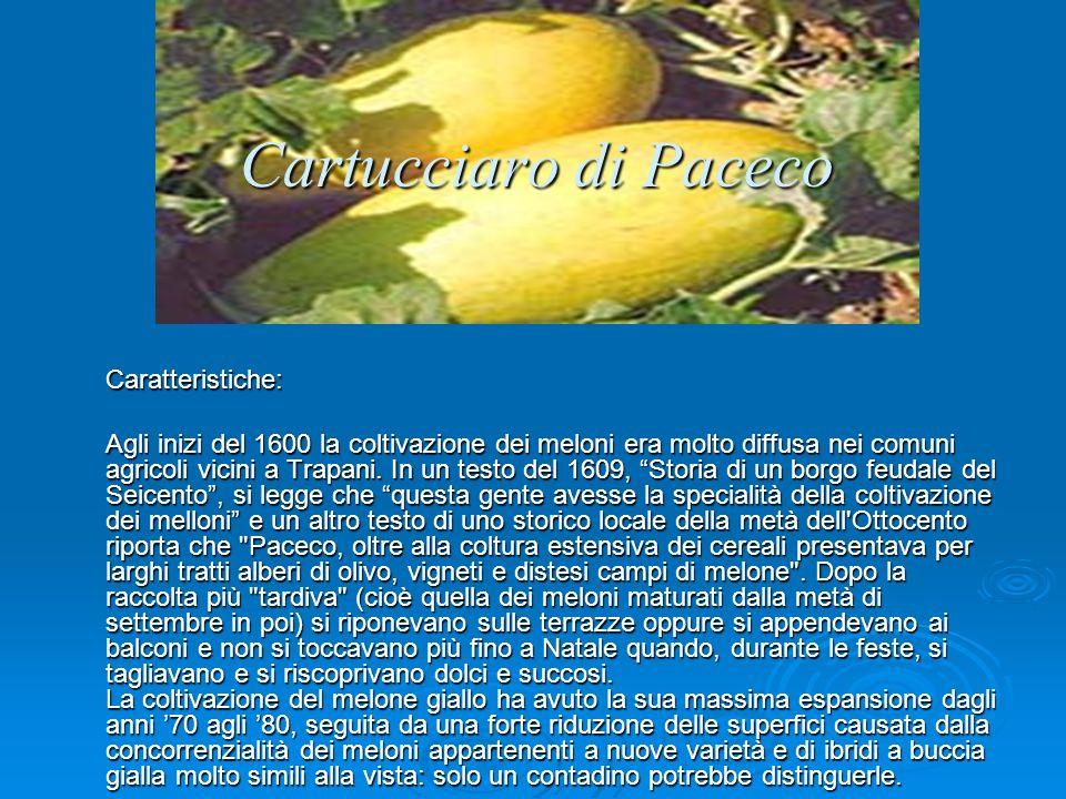 Cartucciaro di Paceco Caratteristiche: Agli inizi del 1600 la coltivazione dei meloni era molto diffusa nei comuni agricoli vicini a Trapani.