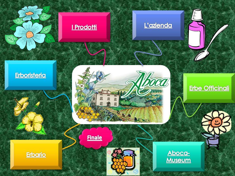 Secondo letimologia il termine Aboca deriva da Camepizio, pianta medicinale dalle proprietà depurative, molto utilizzata in antichità che in dialetto toscano veniva chiamata Abiga .
