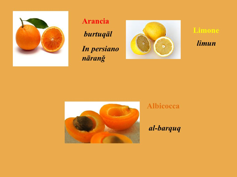 Arancia burtuqāl In persiano nāranğ Limone limun Albicocca al-barquq
