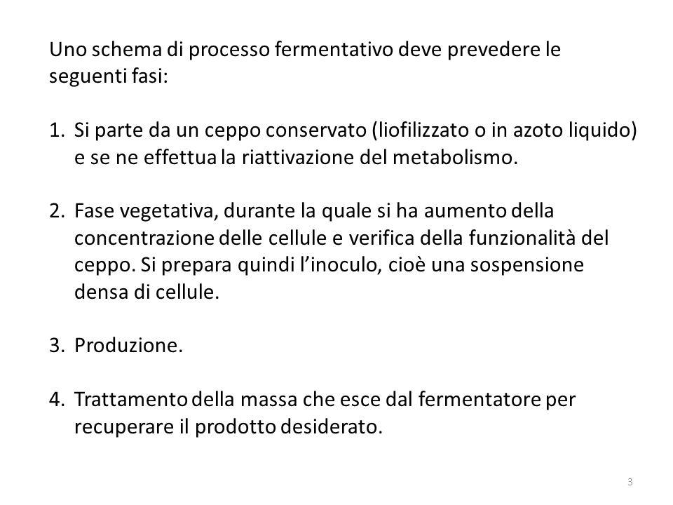 Uno schema di processo fermentativo deve prevedere le seguenti fasi: 1.Si parte da un ceppo conservato (liofilizzato o in azoto liquido) e se ne effet