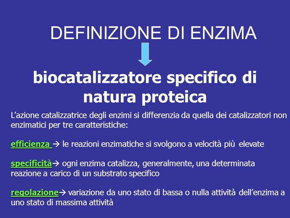 DEFINIZIONE DI ENZIMA biocatalizzatore specifico di natura proteica Lazione catalizzatrice degli enzimi si differenzia da quella dei catalizzatori non enzimatici per tre caratteristiche: efficienza efficienza le reazioni enzimatiche si svolgono a velocità più elevate specificità specificità ogni enzima catalizza, generalmente, una determinata reazione a carico di un substrato specifico regolazione regolazione variazione da uno stato di bassa o nulla attività dellenzima a uno stato di massima attività