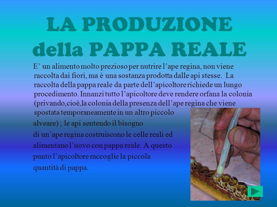 LA PRODUZIONE della PAPPA REALE E un alimento molto prezioso per nutrire lape regina, non viene raccolta dai fiori, ma è una sostanza prodotta dalle api stesse.