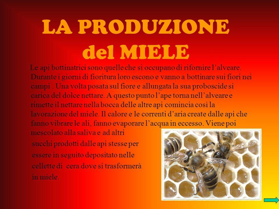 LA PRODUZIONE del MIELE Le api bottinatrici sono quelle che si occupano di rifornire lalveare.