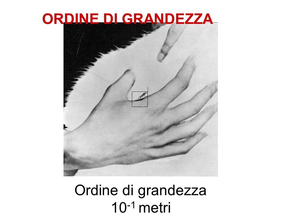 Ordine di grandezza 10 -1 metri ORDINE DI GRANDEZZA