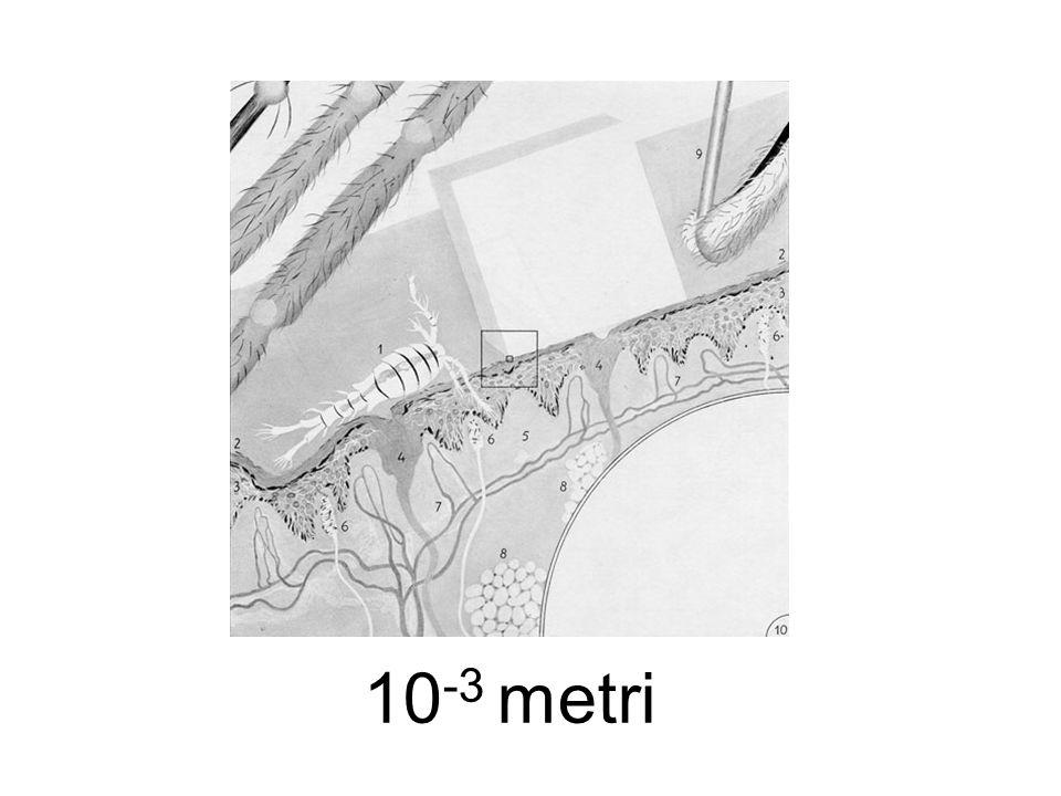 10 -3 metri