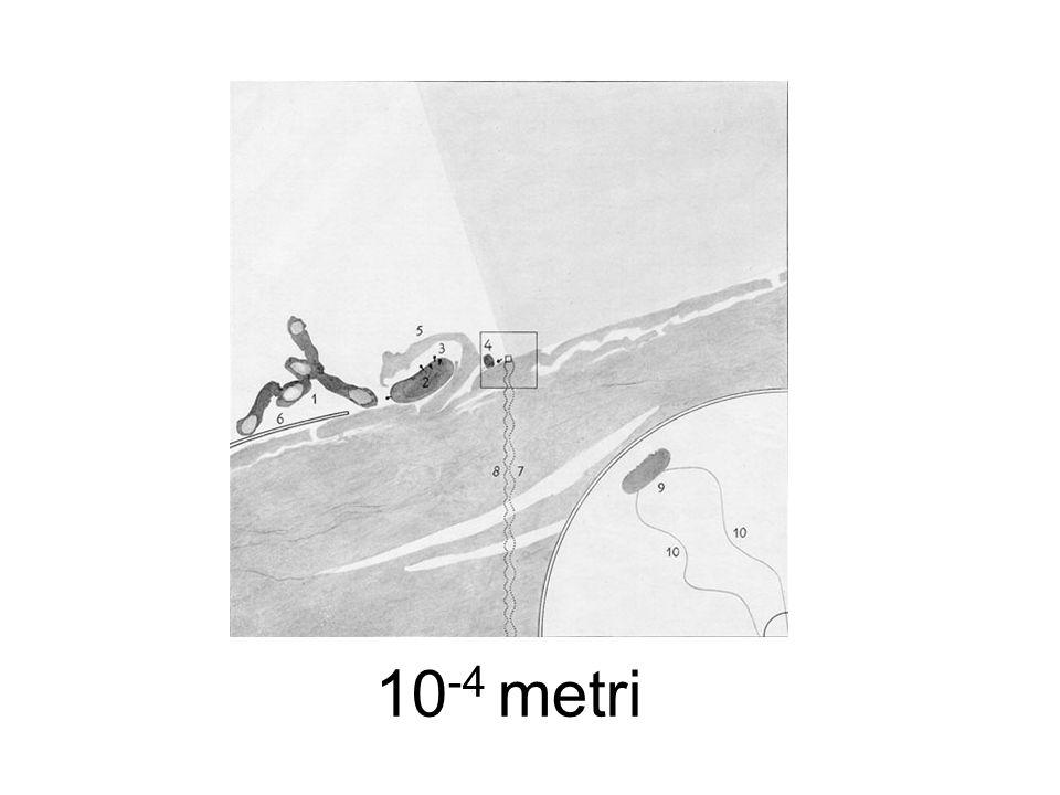 10 -4 metri