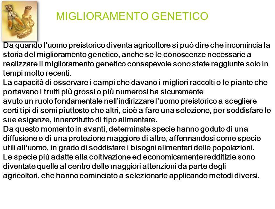 MIGLIORAMENTO GENETICO Da quando luomo preistorico diventa agricoltore si può dire che incomincia la storia del miglioramento genetico, anche se le co