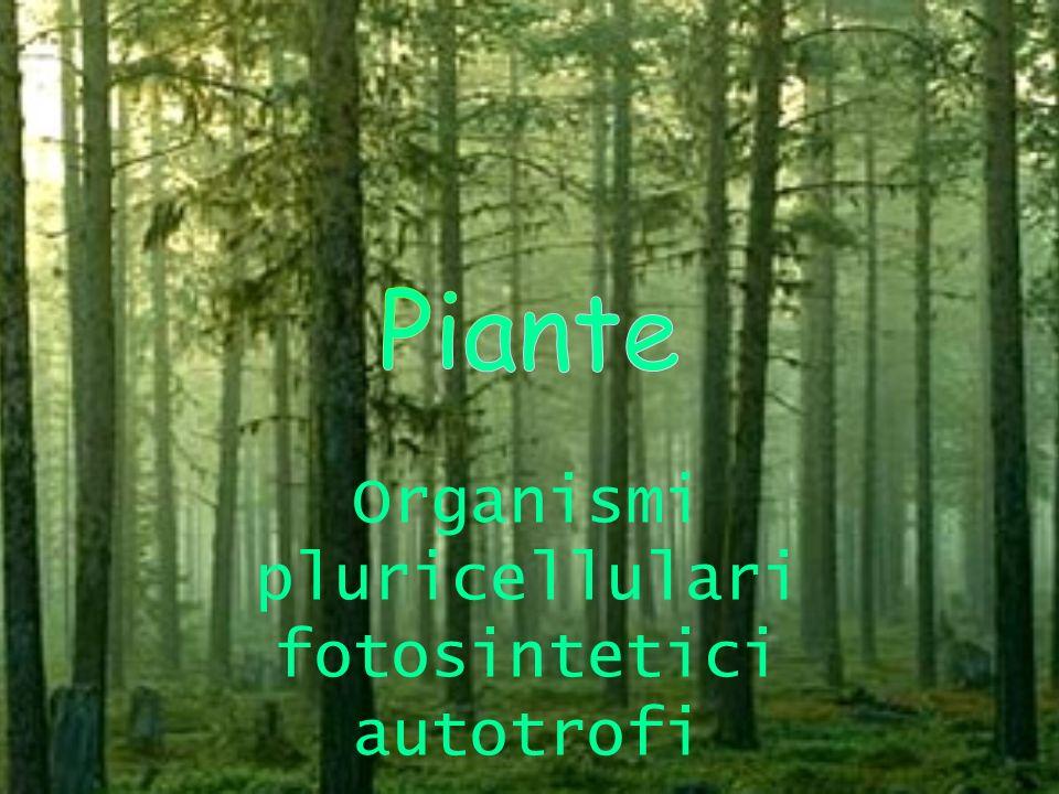 Organismi pluricellulari fotosintetici autotrofi