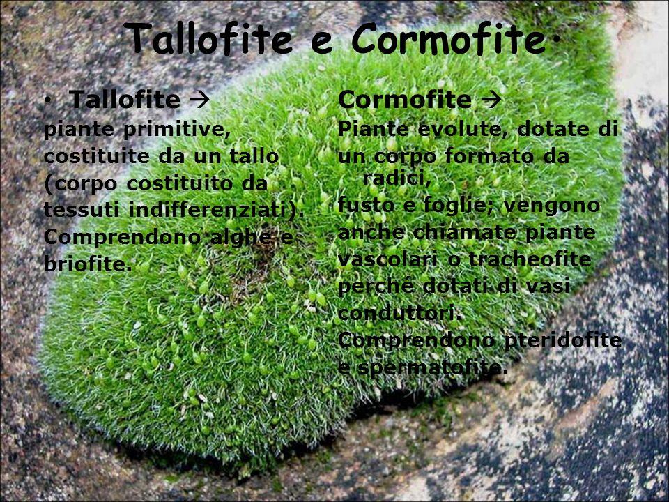 Tallofite e Cormofite. Tallofite piante primitive, costituite da un tallo (corpo costituito da tessuti indifferenziati). Comprendono alghe e briofite.