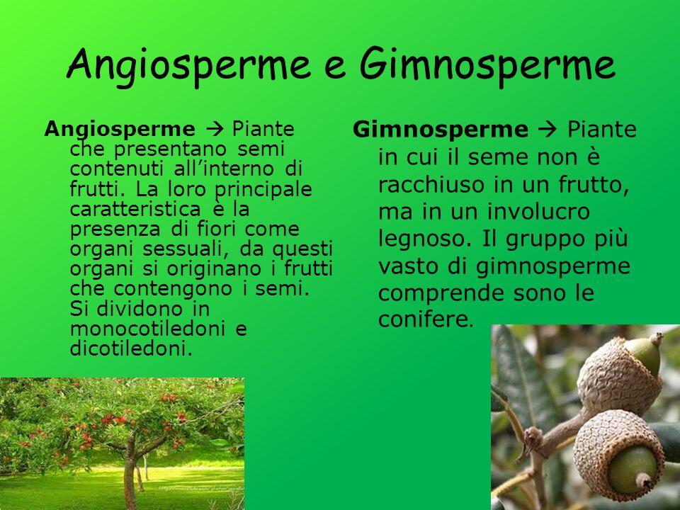 Angiosperme e Gimnosperme Angiosperme Piante che presentano semi contenuti allinterno di frutti.