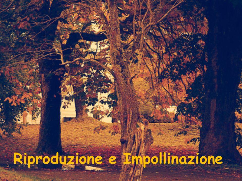 Riproduzione e Impollinazione