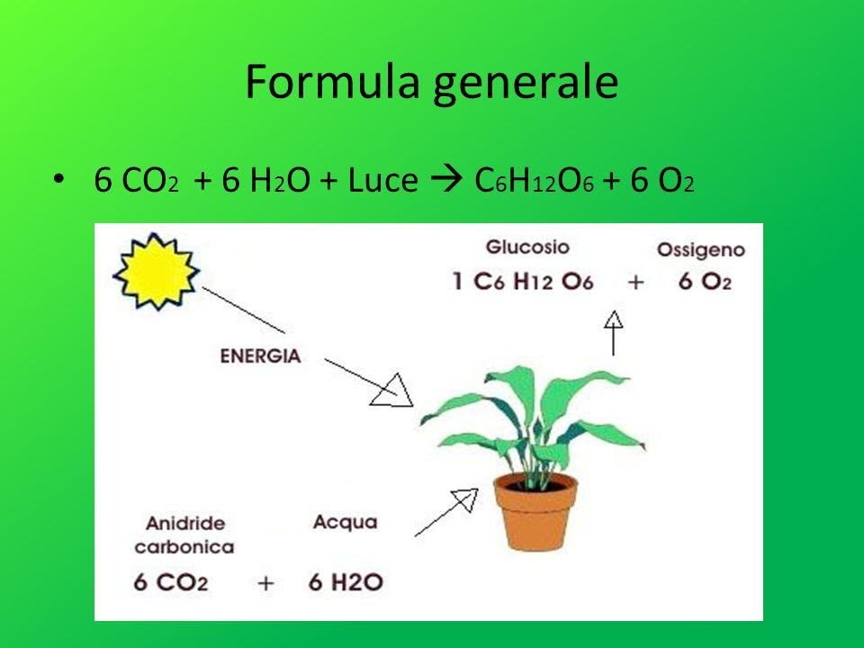 Formula generale 6 CO 2 + 6 H 2 O + Luce C 6 H 12 O 6 + 6 O 2