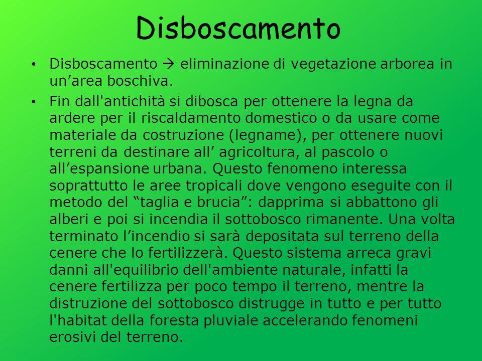 Disboscamento eliminazione di vegetazione arborea in unarea boschiva.