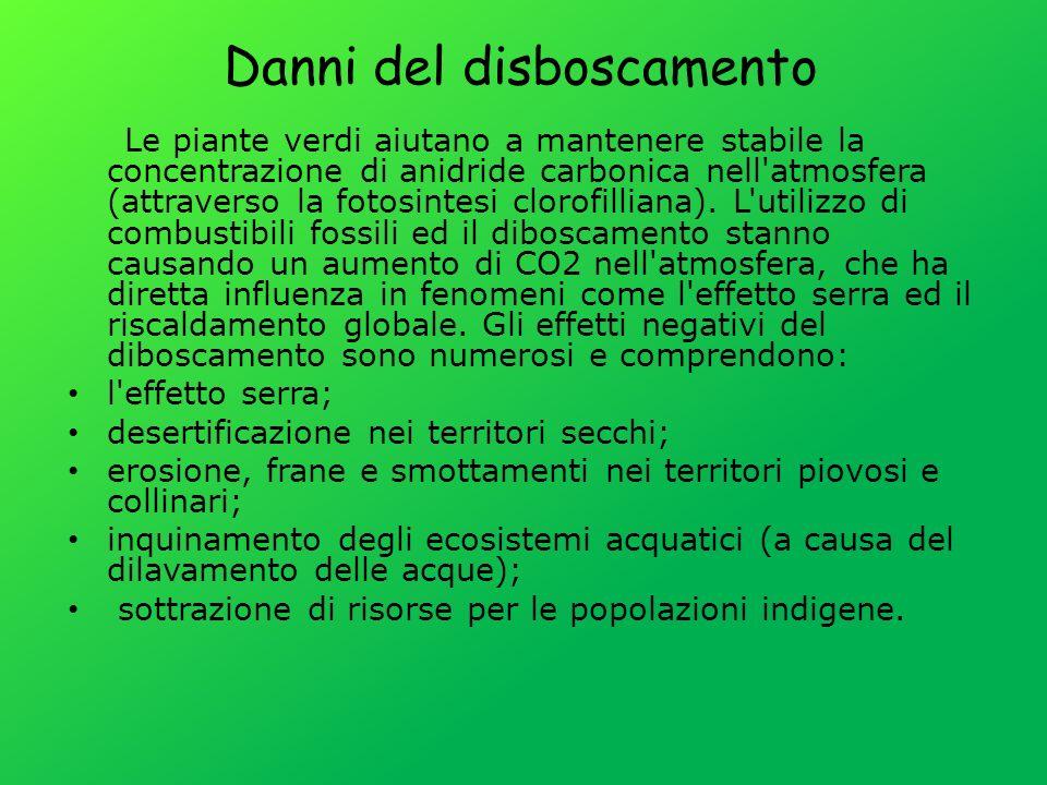 Danni del disboscamento Le piante verdi aiutano a mantenere stabile la concentrazione di anidride carbonica nell'atmosfera (attraverso la fotosintesi