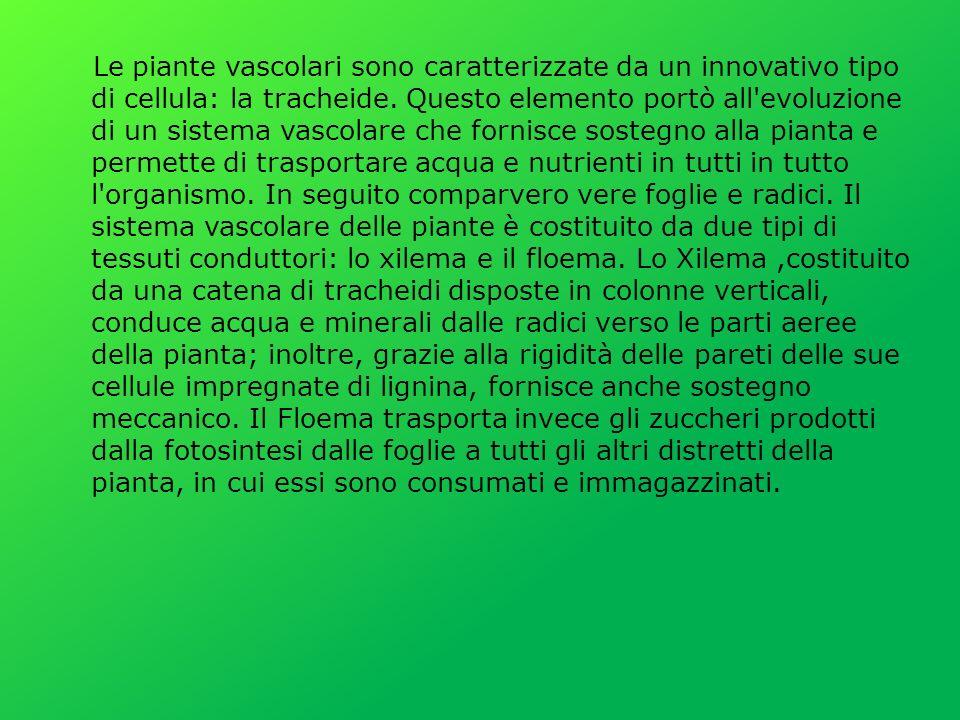Le piante vascolari sono caratterizzate da un innovativo tipo di cellula: la tracheide. Questo elemento portò all'evoluzione di un sistema vascolare c