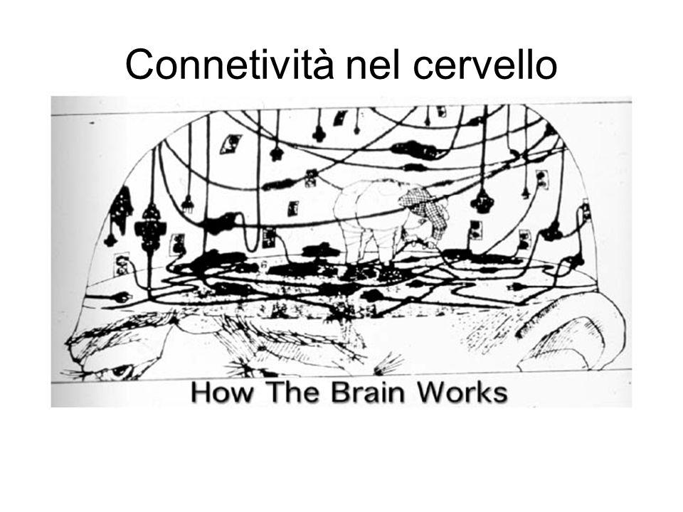 Connetività nel cervello