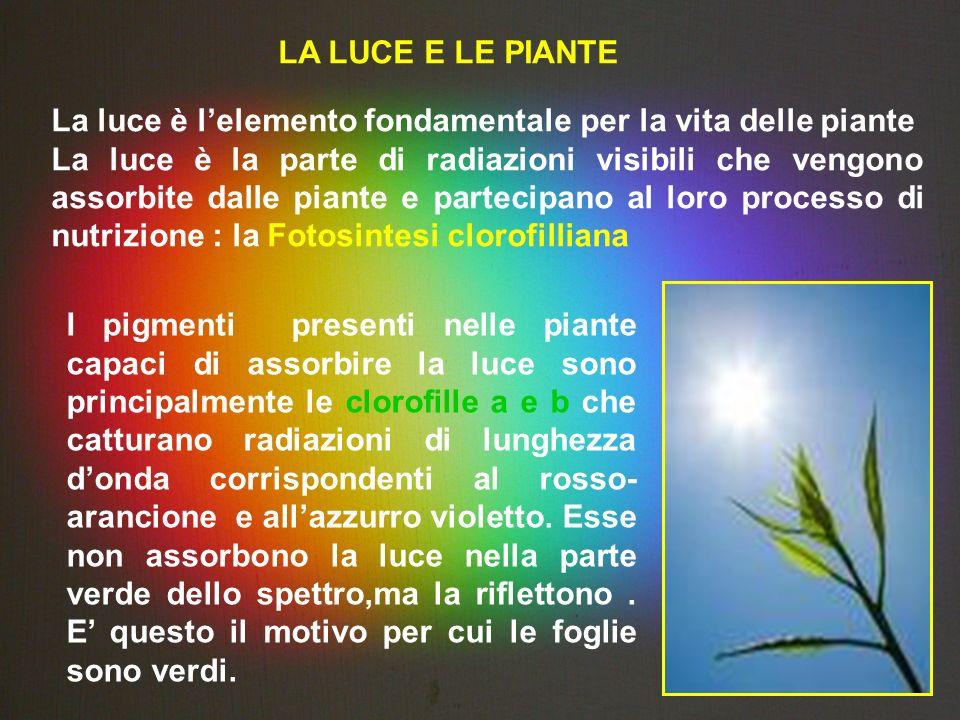 LA LUCE E LE PIANTE La luce è lelemento fondamentale per la vita delle piante La luce è la parte di radiazioni visibili che vengono assorbite dalle pi