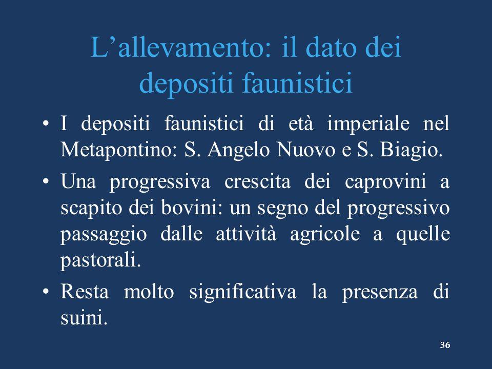 36 Lallevamento: il dato dei depositi faunistici I depositi faunistici di età imperiale nel Metapontino: S.