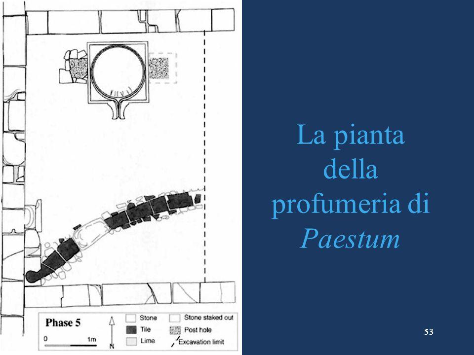 53 La pianta della profumeria di Paestum