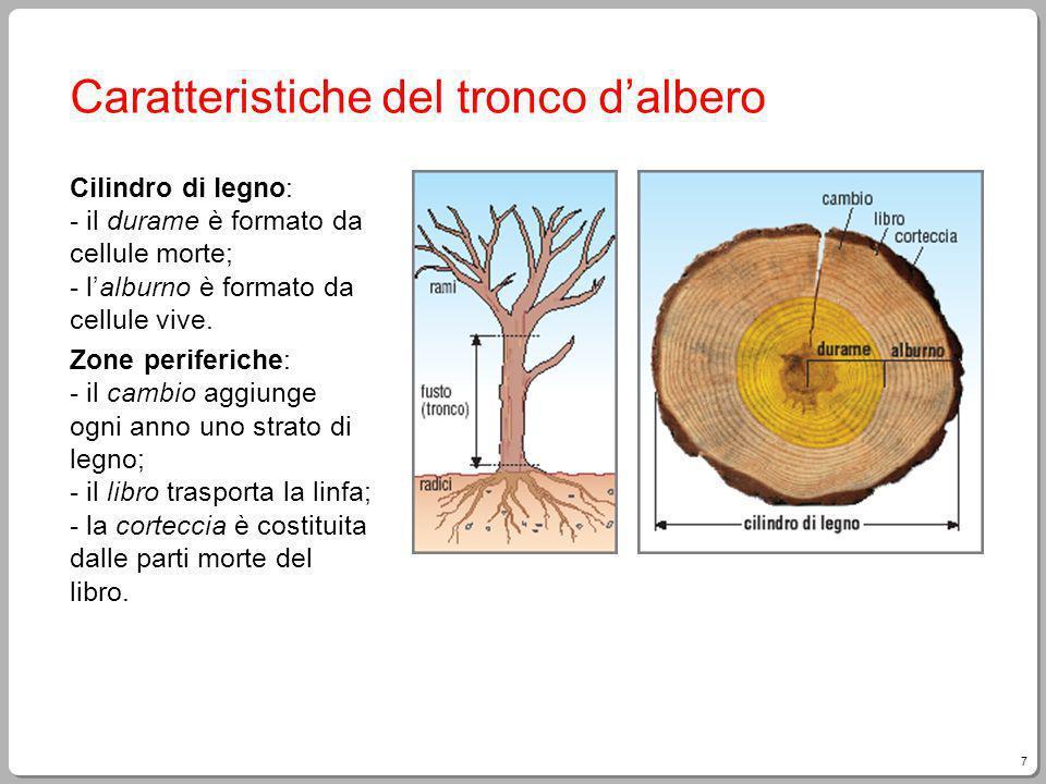 7 Giampietro Paci, Fare Tecnologia Caratteristiche del tronco dalbero Cilindro di legno: - il durame è formato da cellule morte; - lalburno è formato da cellule vive.