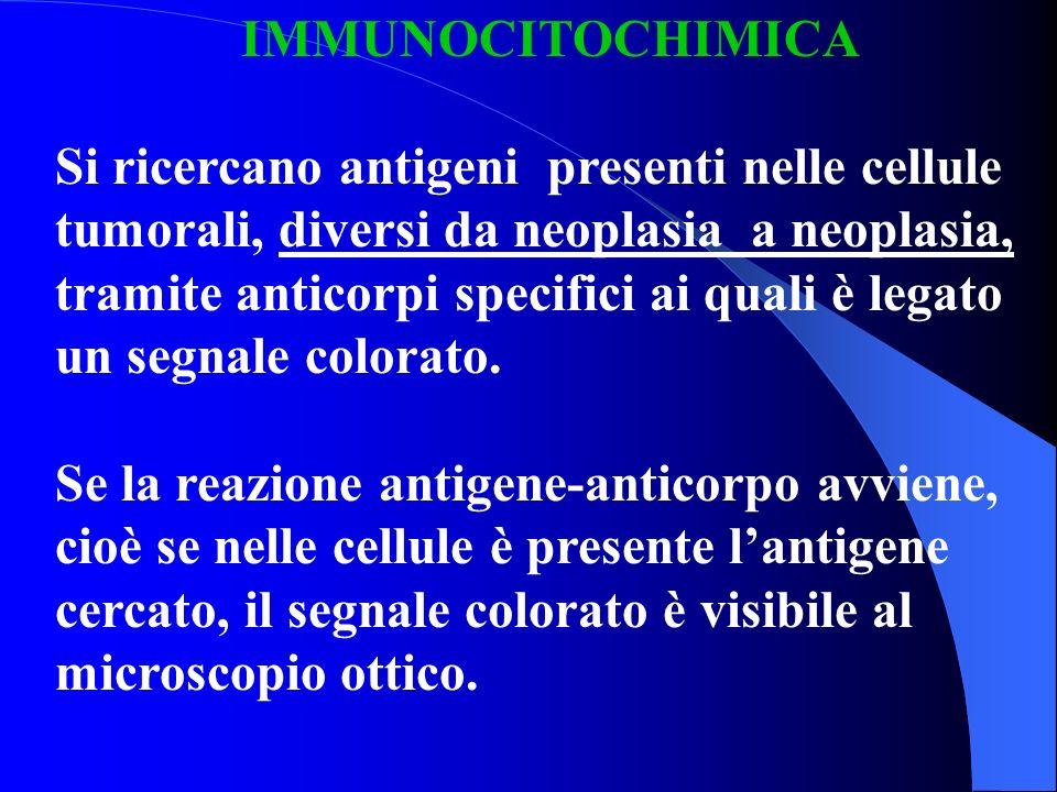 IMMUNOCITOCHIMICA Si ricercano antigeni presenti nelle cellule tumorali, diversi da neoplasia a neoplasia, tramite anticorpi specifici ai quali è lega