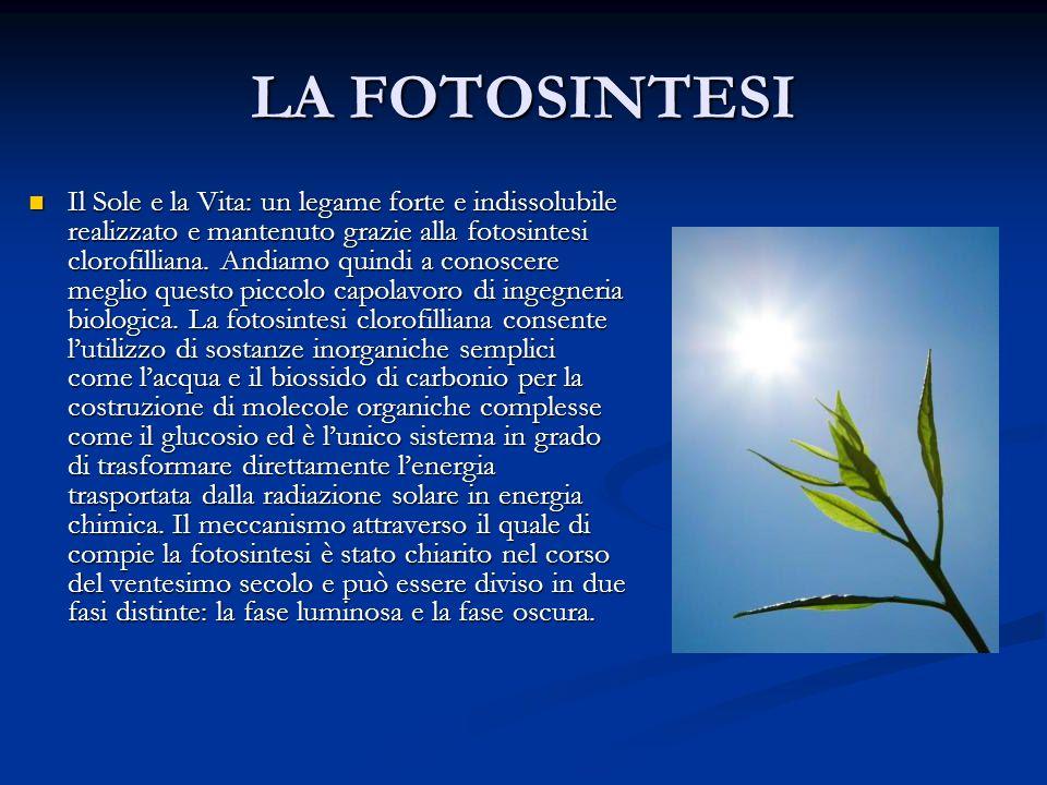 LA FOTOSINTESI Il Sole e la Vita: un legame forte e indissolubile realizzato e mantenuto grazie alla fotosintesi clorofilliana. Andiamo quindi a conos