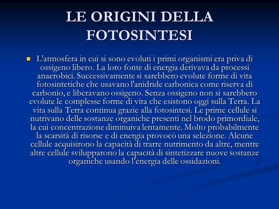 LE ORIGINI DELLA FOTOSINTESI L'atmosfera in cui si sono evoluti i primi organismi era priva di ossigeno libero. La loro fonte di energia derivava da p
