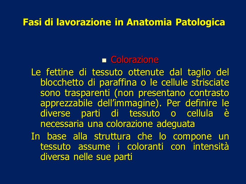 Fasi di lavorazione in Anatomia Patologica Colorazione Colorazione Le fettine di tessuto ottenute dal taglio del blocchetto di paraffina o le cellule