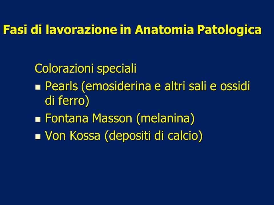 Fasi di lavorazione in Anatomia Patologica Colorazioni speciali Pearls (emosiderina e altri sali e ossidi di ferro) Pearls (emosiderina e altri sali e