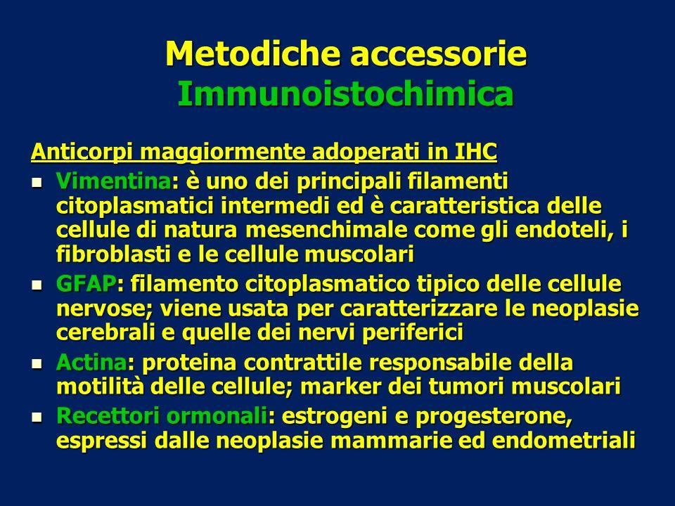 Metodiche accessorie Immunoistochimica Anticorpi maggiormente adoperati in IHC Vimentina: è uno dei principali filamenti citoplasmatici intermedi ed è