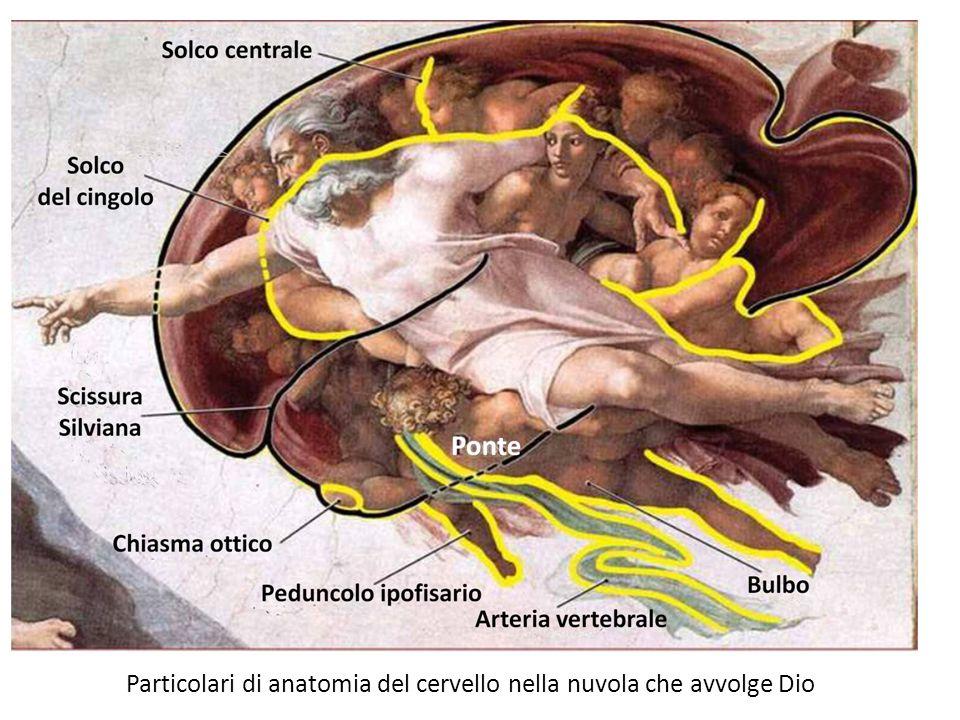 Particolari di anatomia del cervello nella nuvola che avvolge Dio