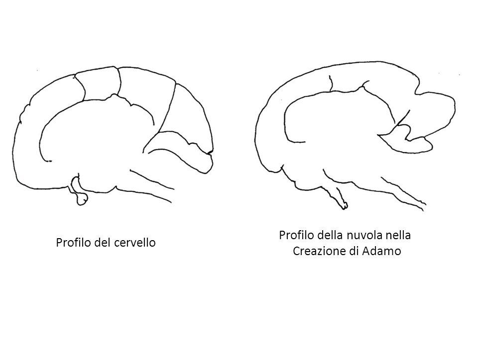 Profilo del cervello Profilo della nuvola nella Creazione di Adamo