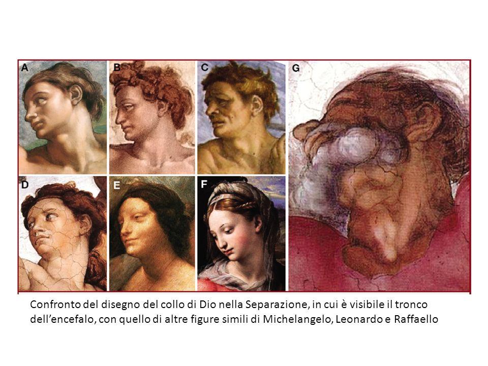 Confronto del disegno del collo di Dio nella Separazione, in cui è visibile il tronco dellencefalo, con quello di altre figure simili di Michelangelo,