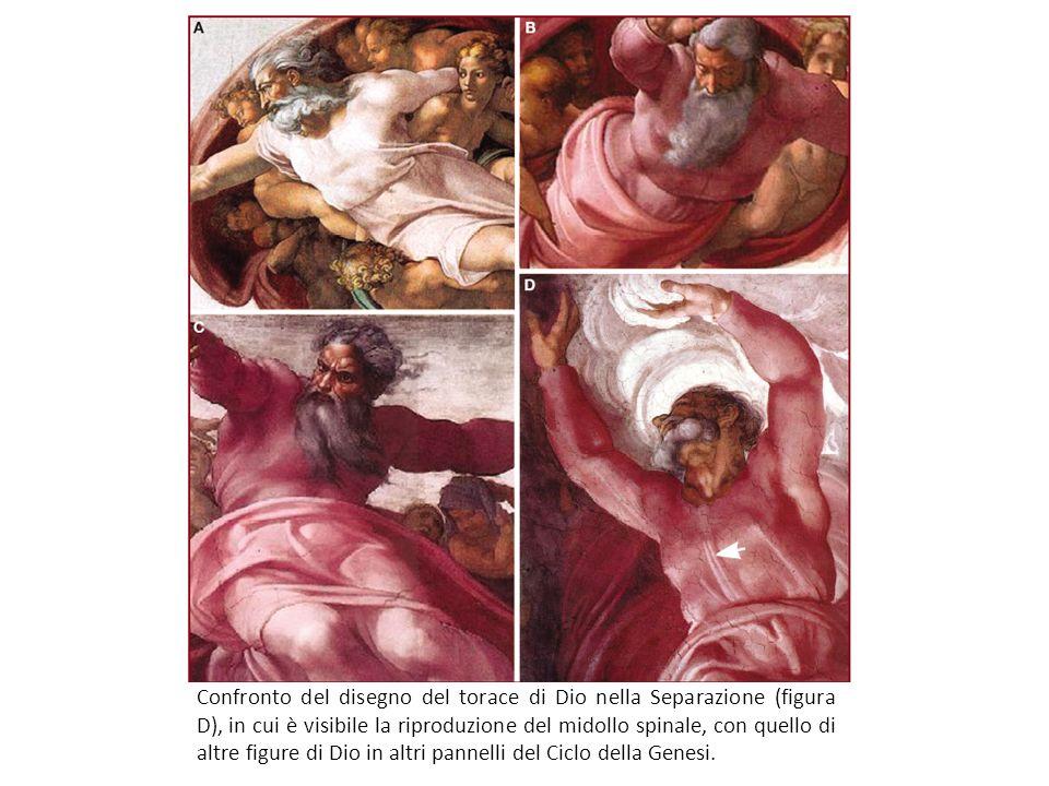 Confronto del disegno del torace di Dio nella Separazione (figura D), in cui è visibile la riproduzione del midollo spinale, con quello di altre figur