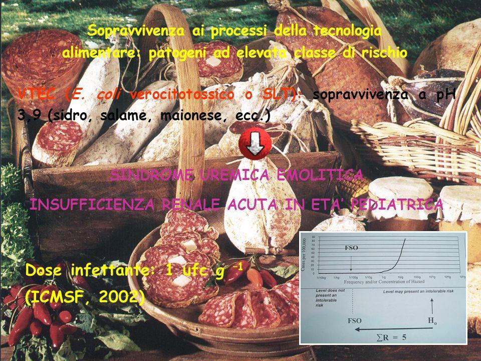 Sopravvivenza ai processi della tecnologia alimentare: patogeni ad elevata classe di rischio VTEC (E. coli verocitotossico o SLT): sopravvivenza a pH