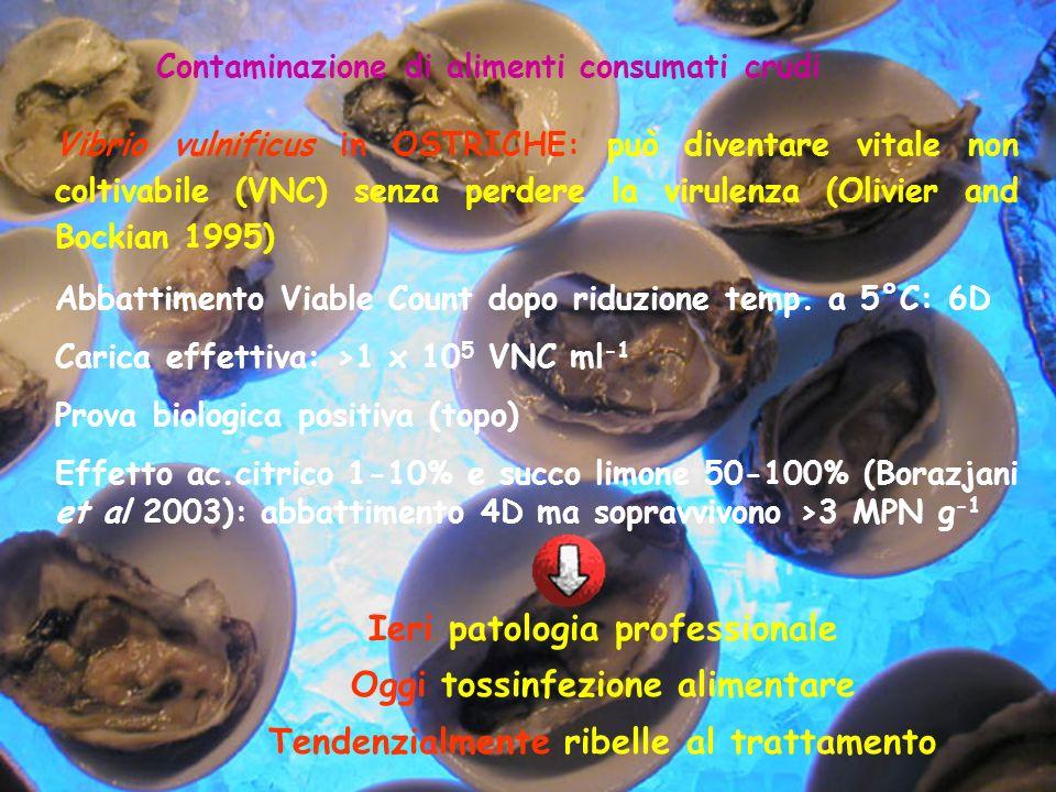 Contaminazione di alimenti consumati crudi Vibrio vulnificus in OSTRICHE: può diventare vitale non coltivabile (VNC) senza perdere la virulenza (Olivi