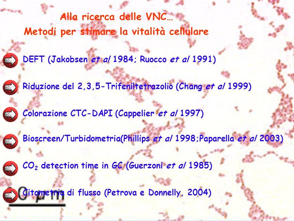 Alla ricerca delle VNC… Metodi per stimare la vitalità cellulare DEFT (Jakobsen et al 1984; Ruocco et al 1991) Riduzione del 2,3,5-Trifeniltetrazolio