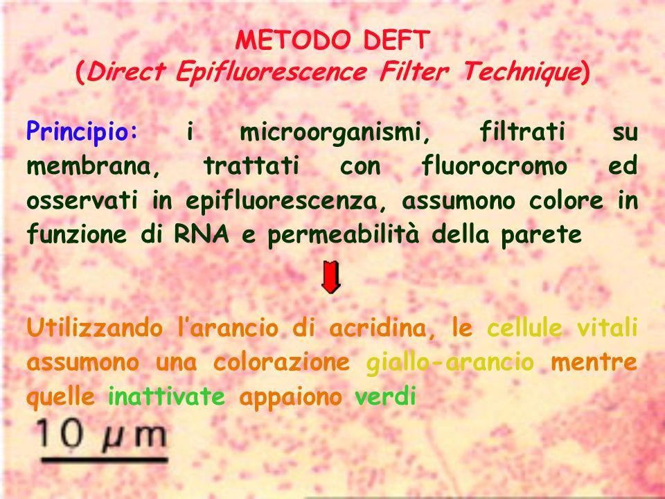 METODO DEFT (Direct Epifluorescence Filter Technique) Principio: i microorganismi, filtrati su membrana, trattati con fluorocromo ed osservati in epif